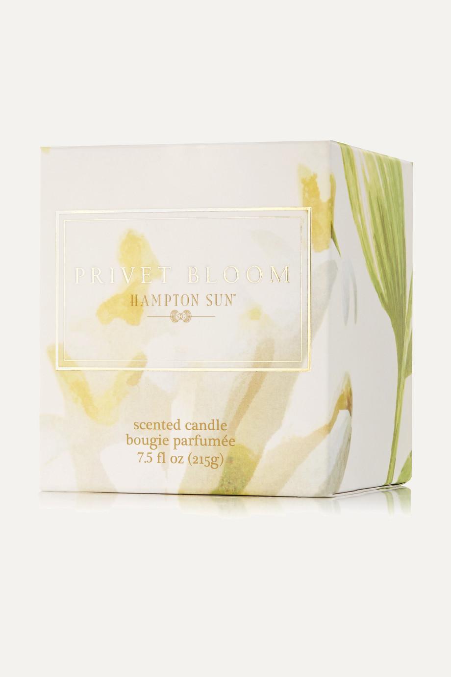 Hampton Sun Privet Bloom Scented Candle, 215g