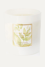 Hampton Sun Privet Bloom Scented Candle, 215g