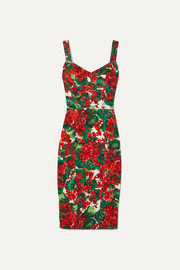 Dolce & Gabbana Floral-print stretch-cady dress